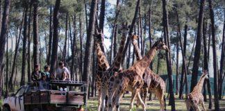 Atividades para fazer em família no ALENTEJO - Um verão inesquecível