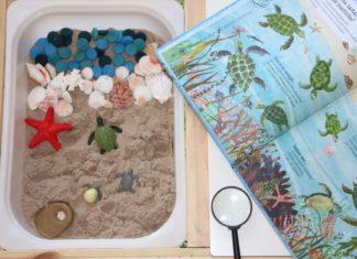 Ciclo vida tartarugas-capa