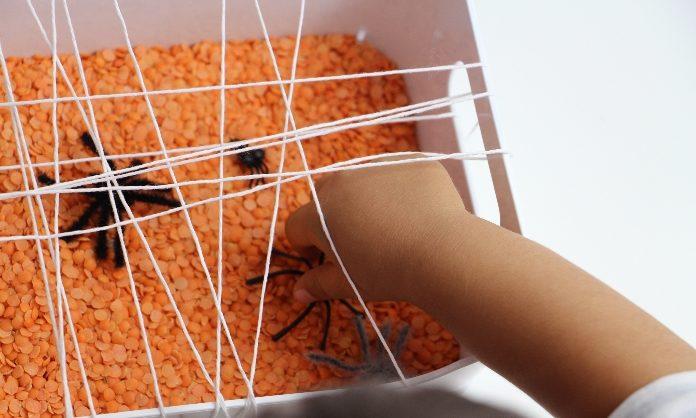 apanhar aranhas1