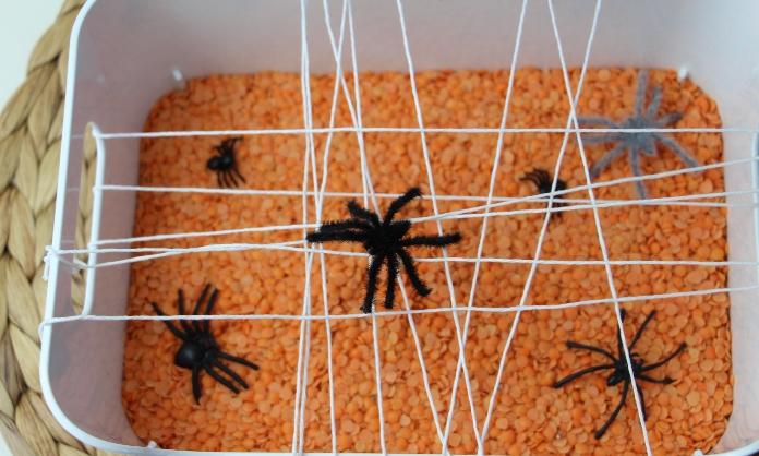 apanhar aranhas3