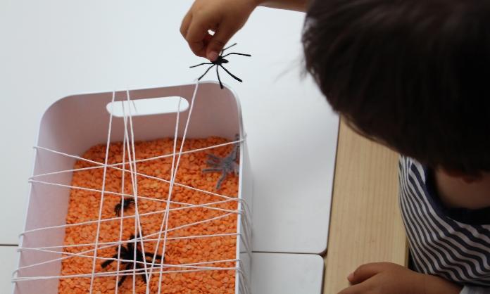 apanhar aranhas4