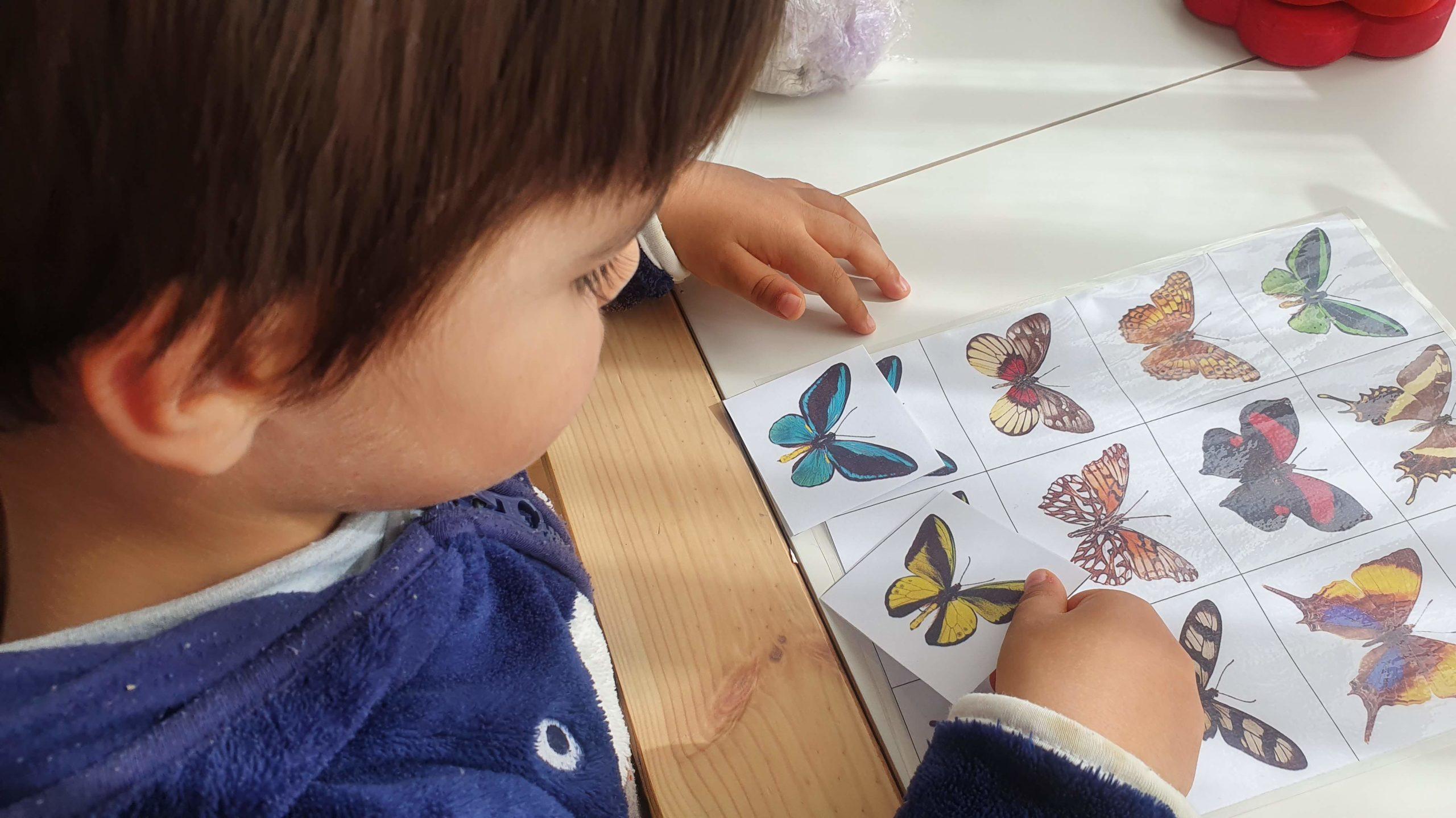 jogo memoria-associacao borboletas