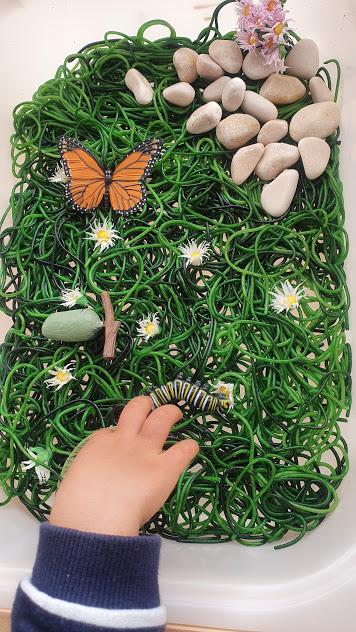 small world borboletas1
